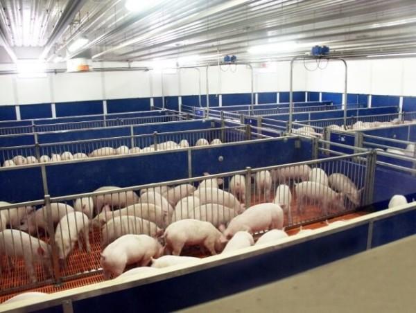 Свинарник цена
