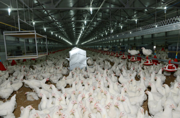 Монтаж и отделка птицефабрик в Минске под ключ