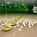 Птицефабрики цена